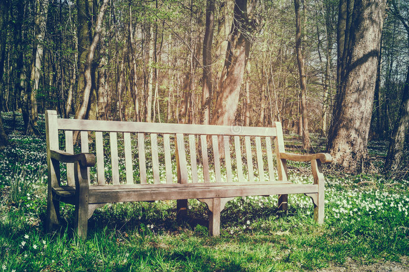 Park der Holzbank im Frühjahr lizenzfreies stockbild