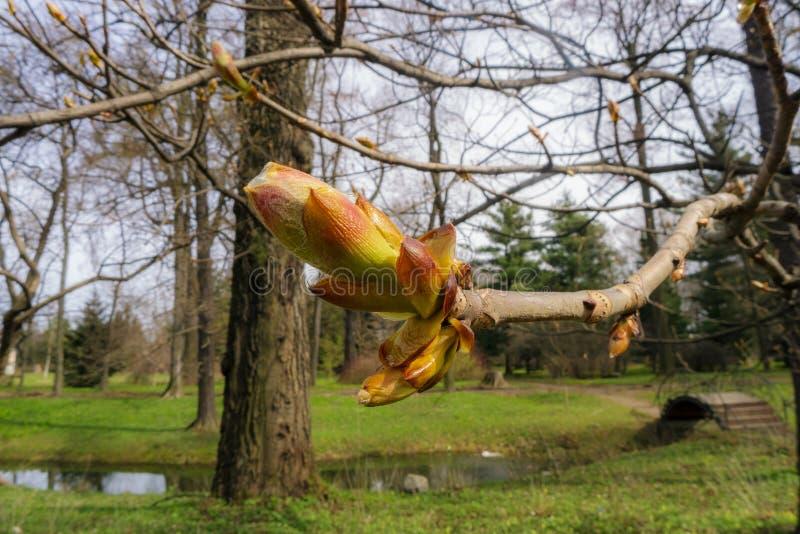 Park der Kastanie im Frühjahr stockfoto