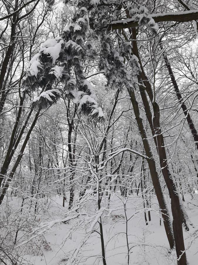 Park des harten Winters lizenzfreie stockfotografie