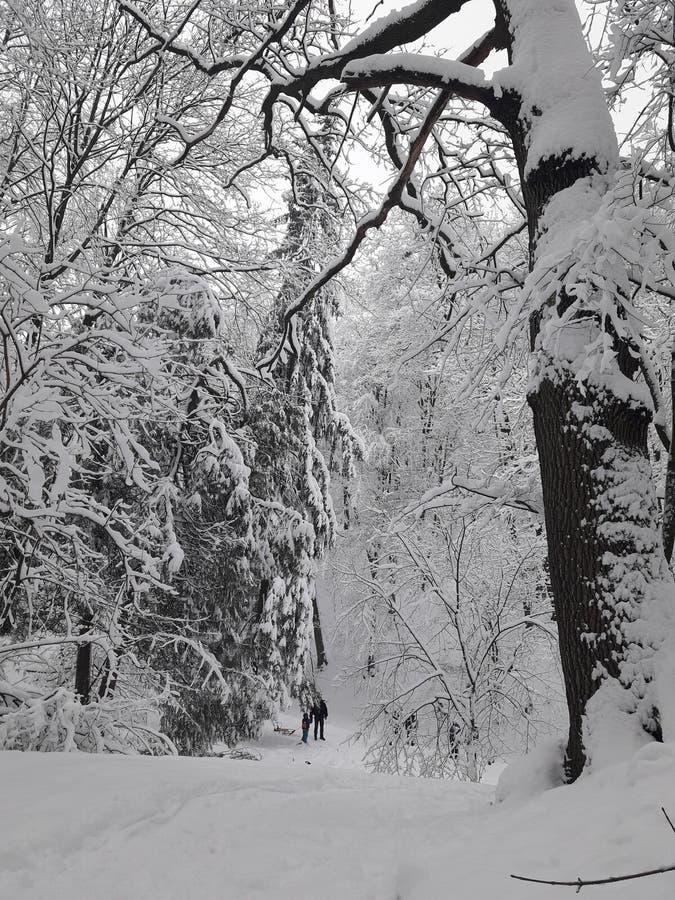 Park des harten Winters stockfoto