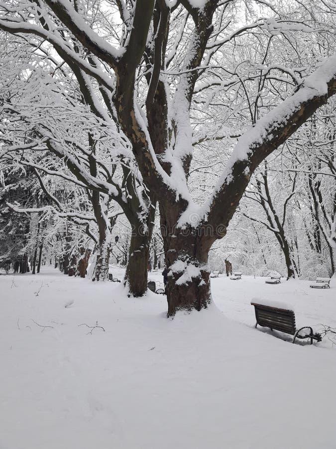 Park des harten Winters lizenzfreie stockbilder