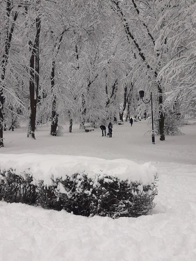 Park des harten Winters stockbild