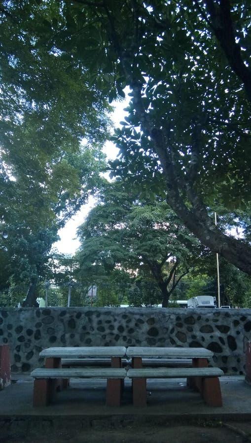 Park des späten Nachmittages lizenzfreies stockbild