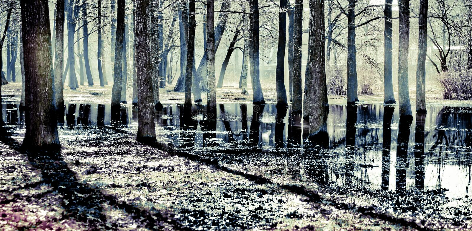 A park in early spring with melt water. On the ground stock photography