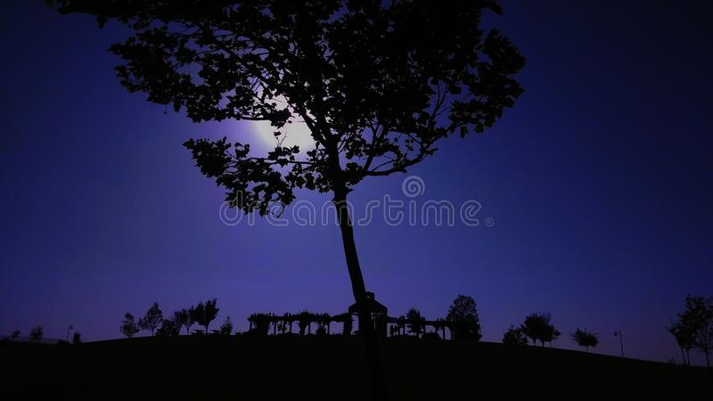 Park Effects royalty free stock photo