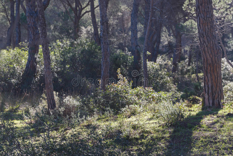 Park-Einblicklandschaften Maremma regionale stockfotografie