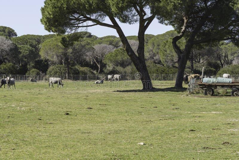 Park-Einblicklandschaften Maremma regionale stockbilder