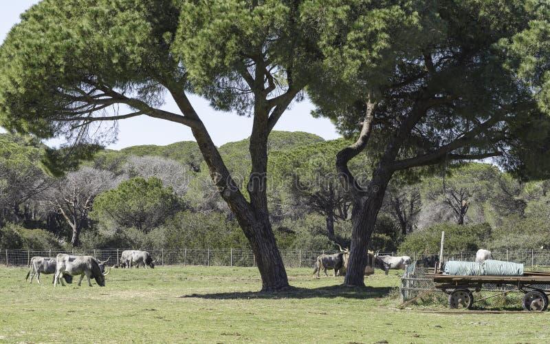 Park-Einblicklandschaften Maremma regionale stockfotos