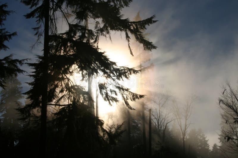 Park en mist 2 van Stanley royalty-vrije stock fotografie