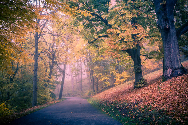 Download Park in fall stock image. Image of yellow, woods, outdoors - 32032057