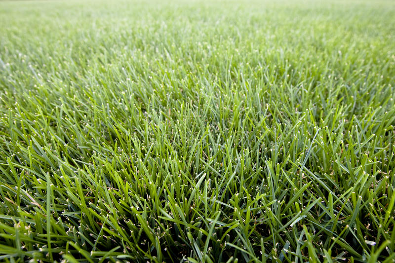 Park Field of Green Grass royalty free stock image