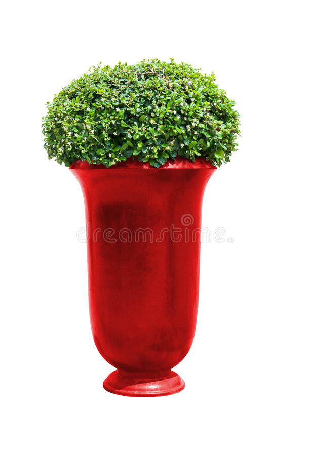 Park flowerpot with evergreen plant with clipping path. Park flowerpot with evergreen plant isolated on white with clipping path royalty free stock photography