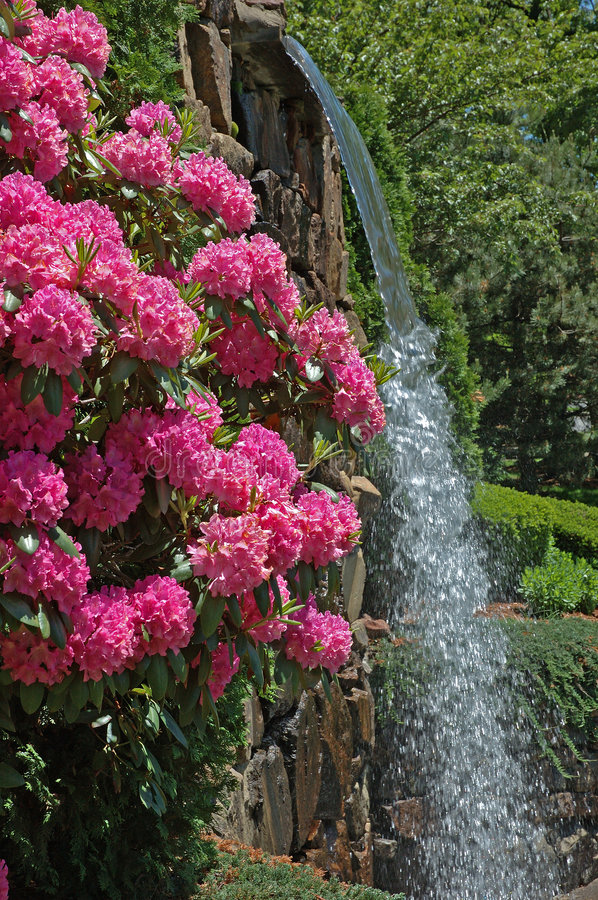 Park Flowers & Waterfall stock photos