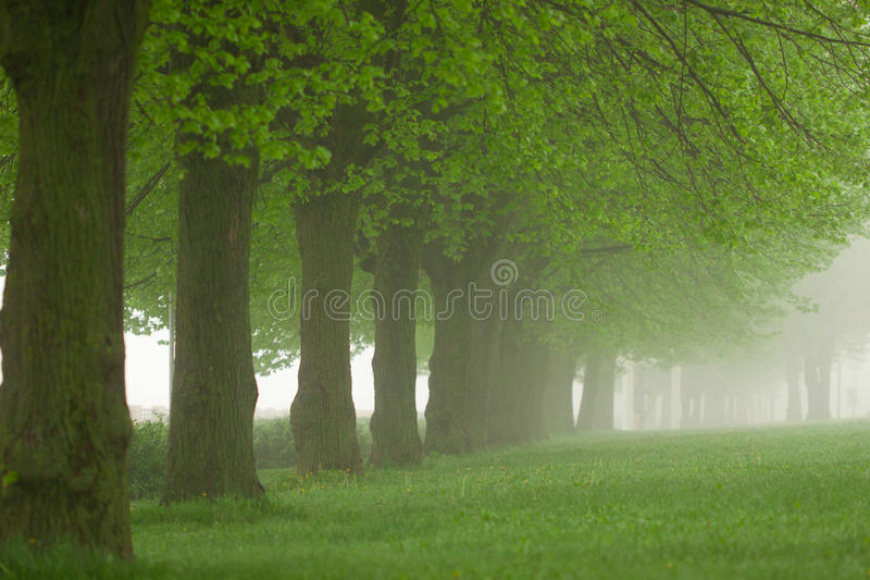 Download Park in the fog stock image. Image of tree, outside, background - 17584103