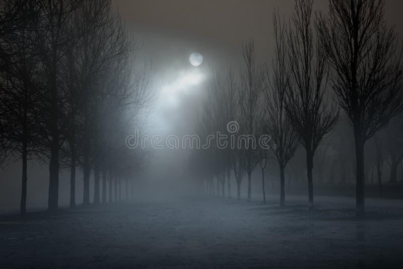 Park in a foggy full moon night royalty free stock photo