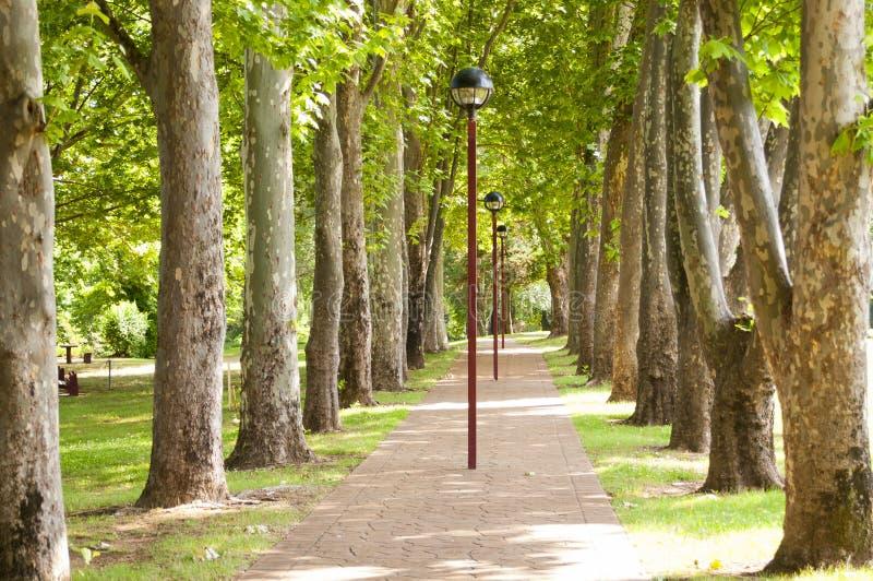 Download Park Footpath stock image. Image of summer, tree, walkway - 23408625