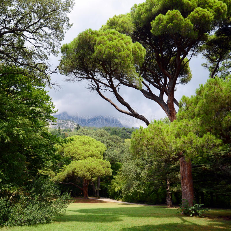 Park with green trees and a mountain. Park with green trees and a mountain in the background royalty free stock image