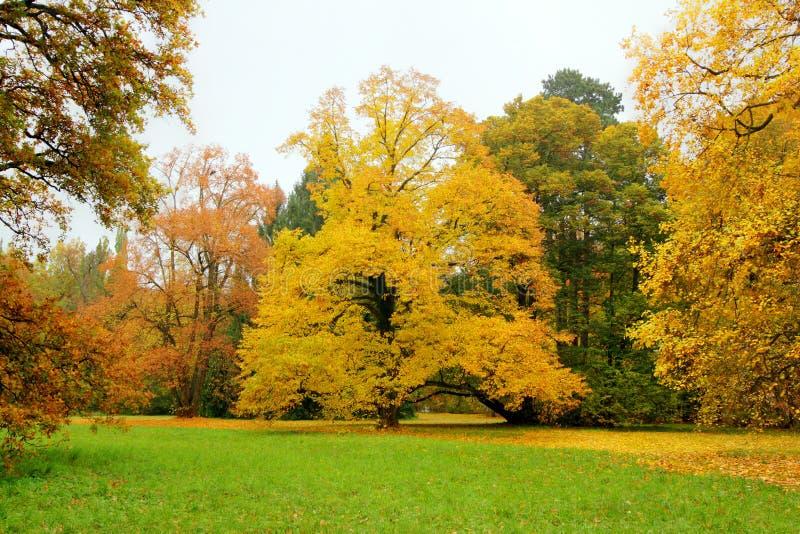 Park, Herbst lizenzfreies stockfoto