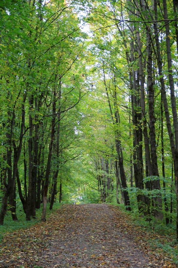 Park in Herbst zehn lizenzfreie stockfotografie