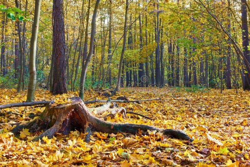 Park - Herbstlandschaft stockfotografie