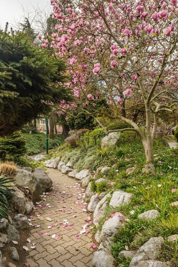 Park in het voorjaar stock foto
