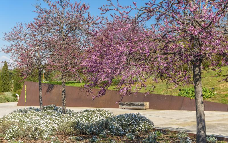 Park in het voorjaar stock afbeeldingen