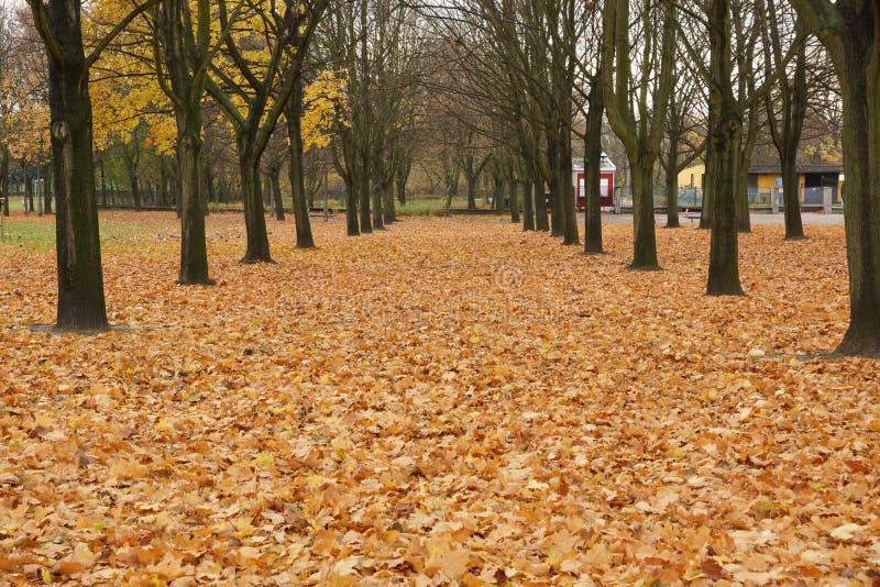 Park i hösten arkivfoto