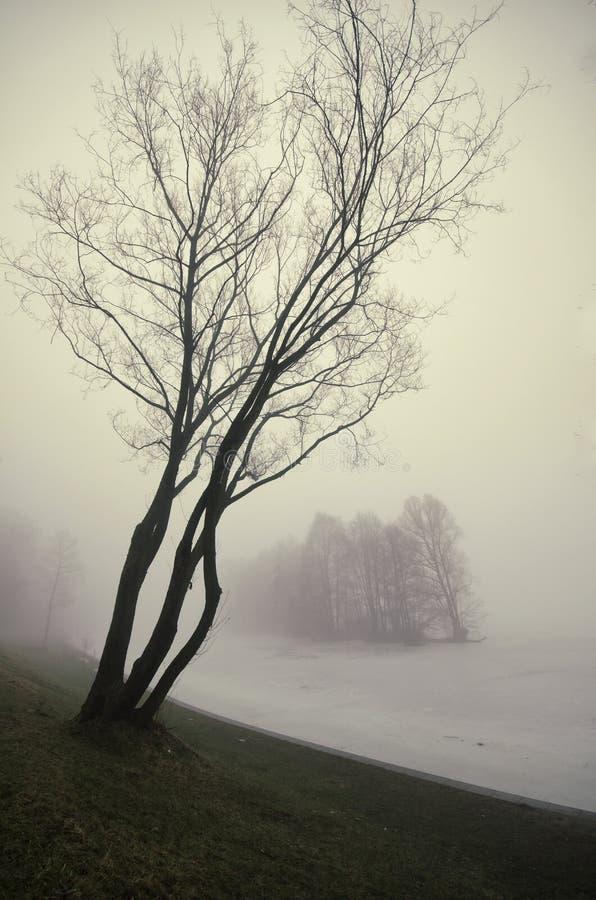 Park i rzeka w mgle zdjęcia royalty free