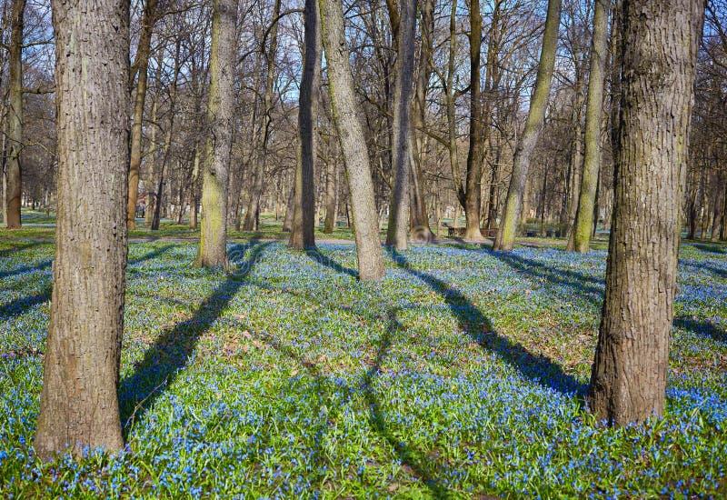 Park im Frühjahr stockfotos