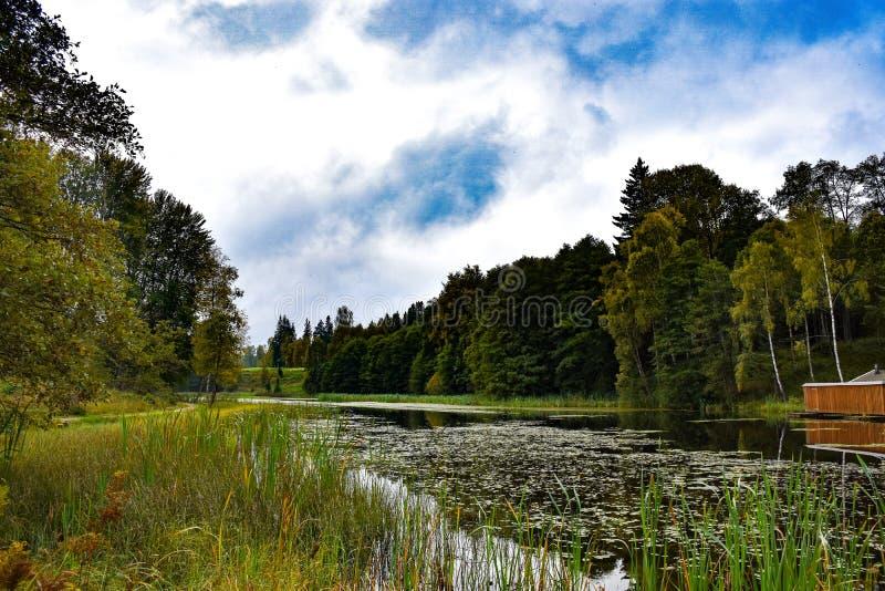 Park im Wald lizenzfreie stockbilder