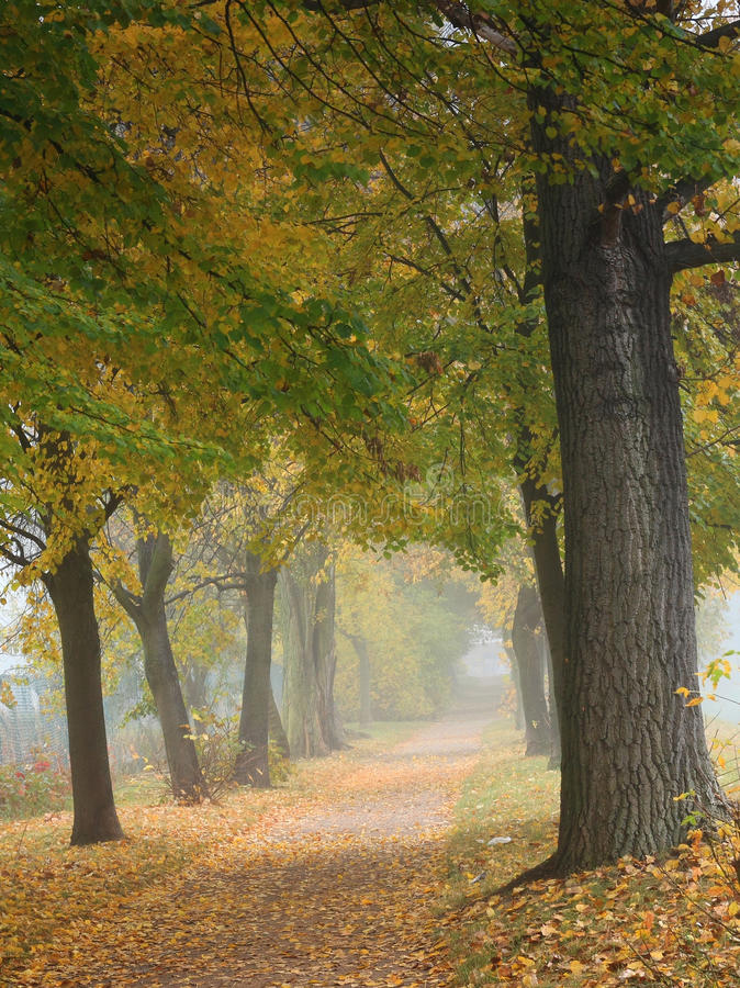 Free Park In Autumn Royalty Free Stock Photo - 12471015