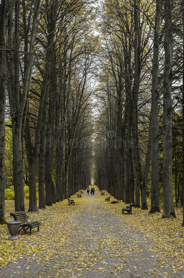 Free Park In The Autumn Stock Photo - 34871490