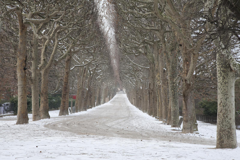 Park Jardin DES-Plantes im Winter, Paris stockfotos