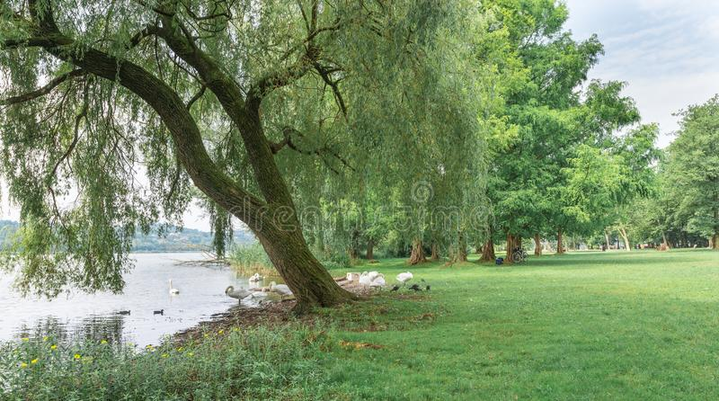 Park on the lake. Lake Varese and the green area of Schiranna stock photo