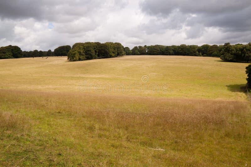Download Park Land, Cranborne Chase, Dorset, UK Stock Image - Image: 10359289