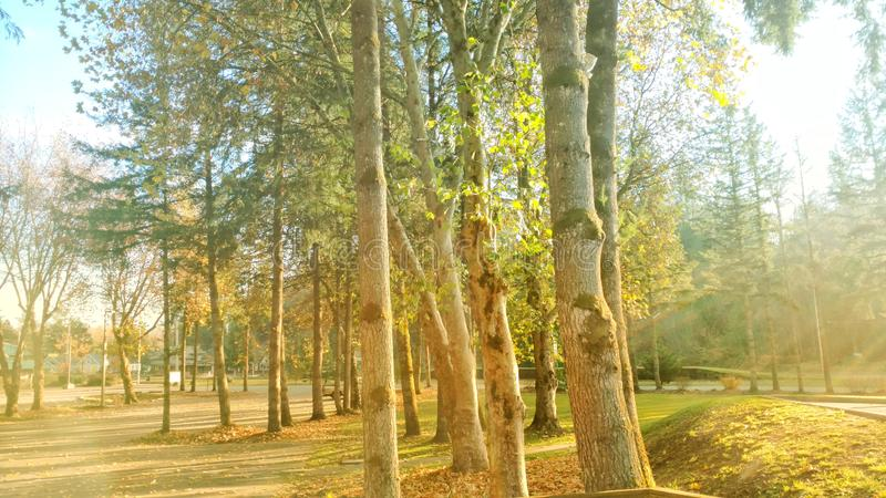 Park landscape lush trees Concrete Washington stock image