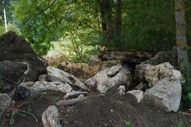 Park landscape stones tree moss leaves close -up. stock images