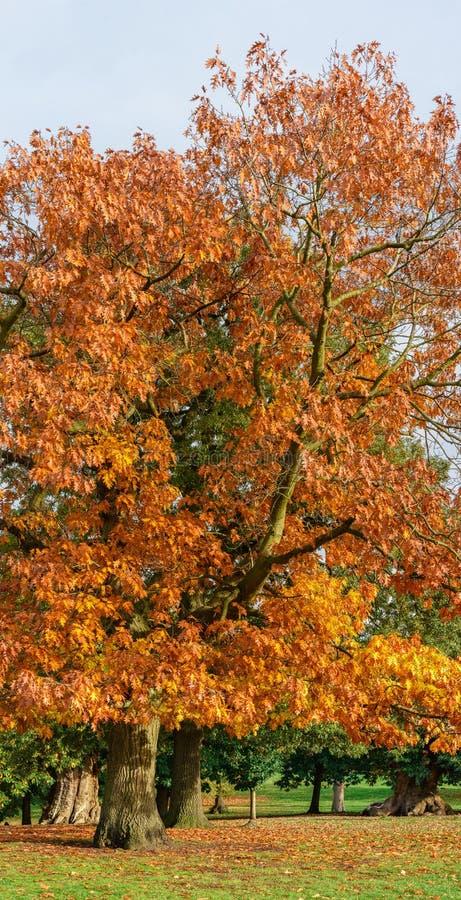 Park Londons Greenwich im Herbst lizenzfreie stockfotografie