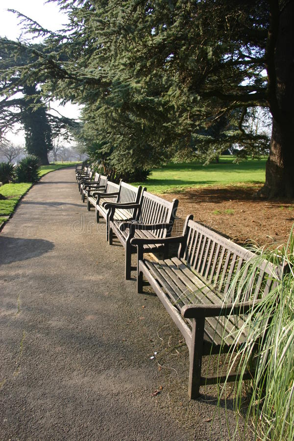 Benches in park. Ornamental park with a long row of benches adjacent to a path. Large trees in the background stock photos