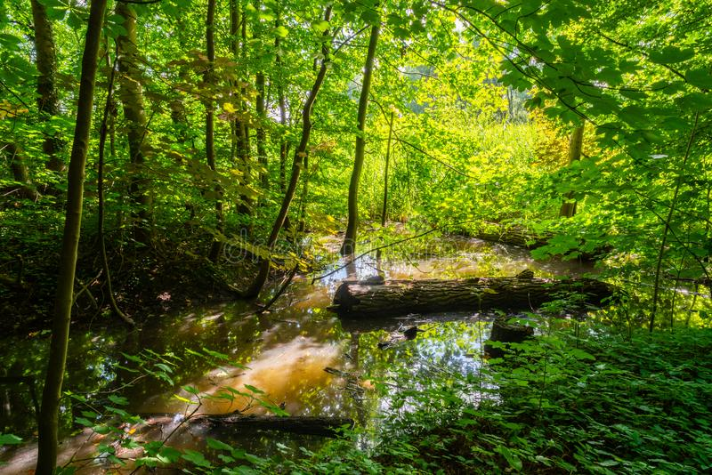 A park that looks like a jungle stock photos