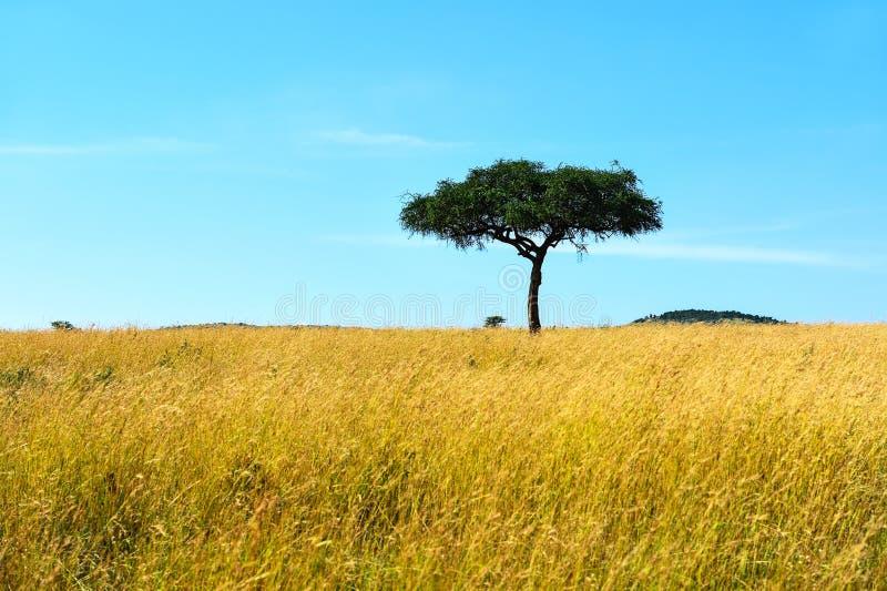 Park Masai Mara stock afbeelding
