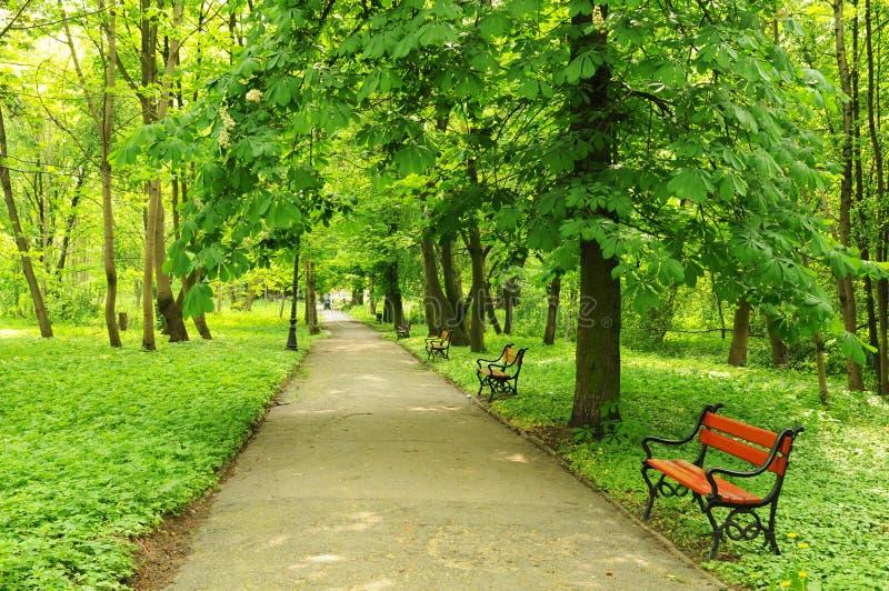 Park in Mei stock afbeeldingen
