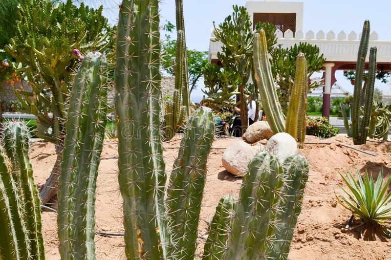Park met cactus exotische tropische woestijn tegen witte steengebouwen in Mexicaanse Latijns-Amerikaanse stijl tegen de blauwe he royalty-vrije stock fotografie