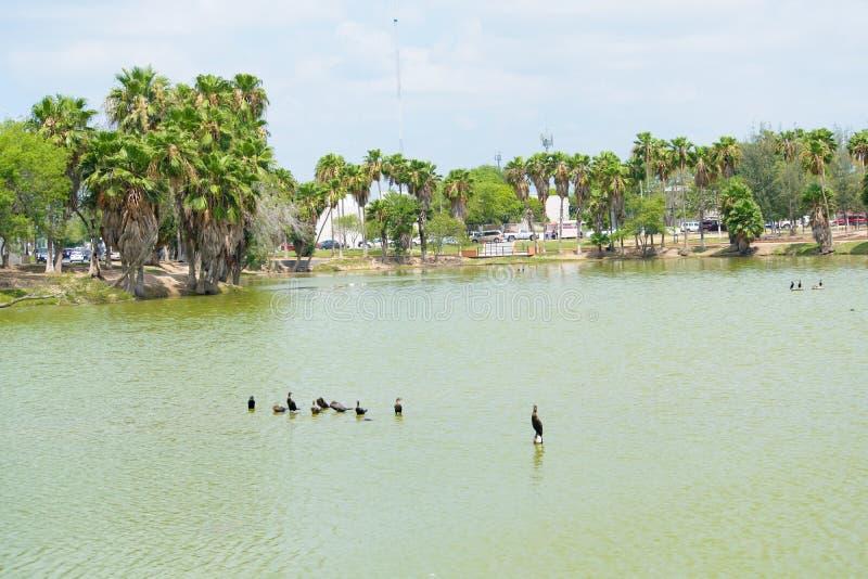 Park mit Palmen lizenzfreies stockfoto