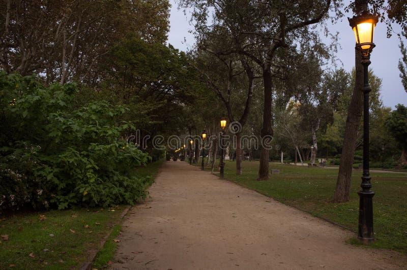 Park na półmroku zdjęcia royalty free