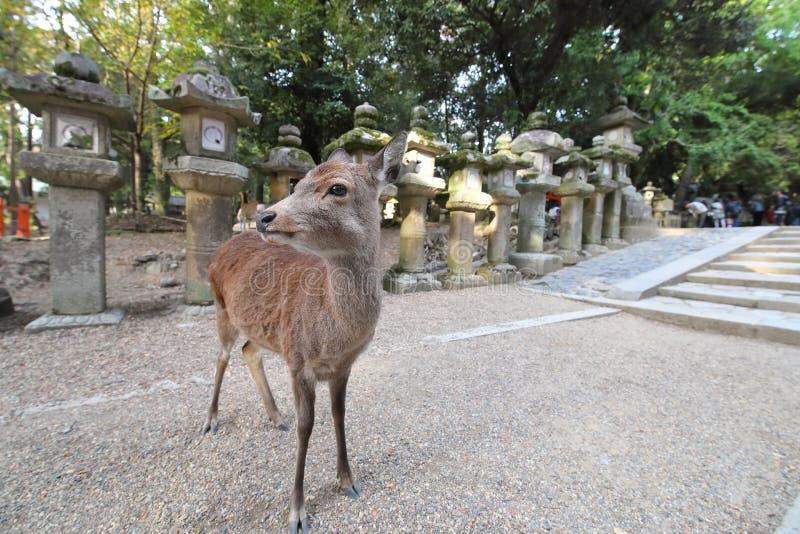 Park Nara Japonia obraz stock