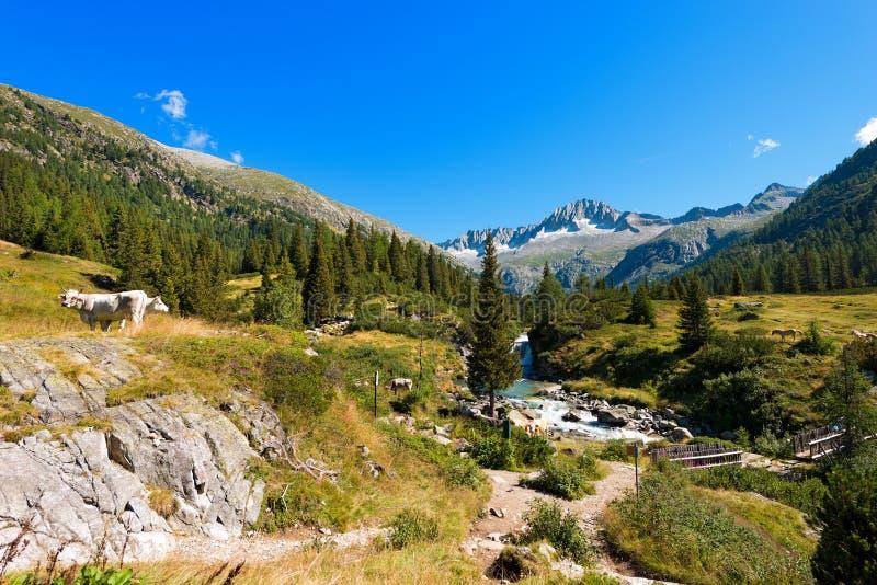 Park Narodowy Adamello Brenta, Włochy - obrazy stock