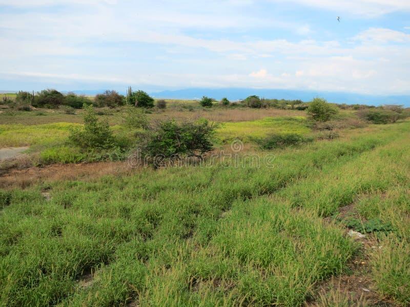 Park Narodowy Isla de Salamanca, Barranquilla, Kolumbia zdjęcia stock
