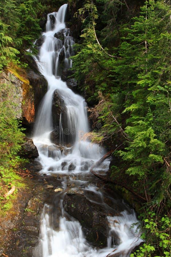 park narodowy na deszcz zdjęcie stock