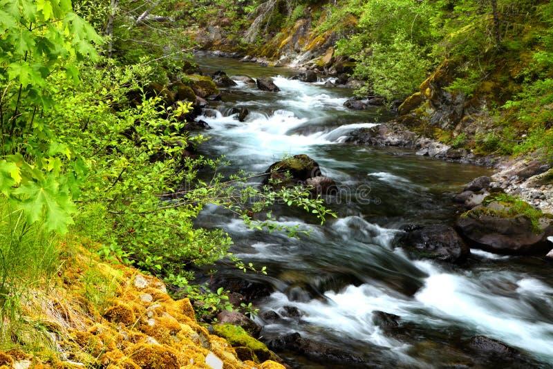 park narodowy na deszcz zdjęcie royalty free